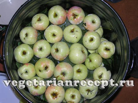 Приготовление моченых яблок