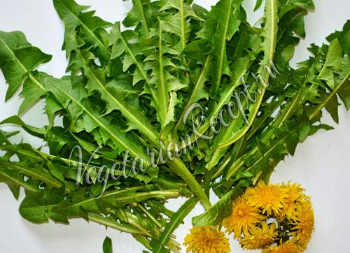 листья и цветы одуванчиков