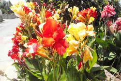 фото кипрских цветов