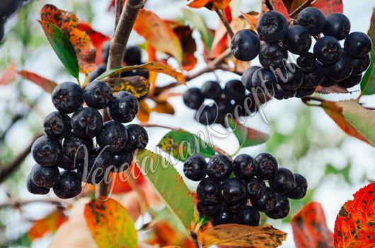 Компот из черноплодной рябины: 9 рецептов как варить ...