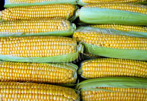 Как замораживать кукурузу на зиму