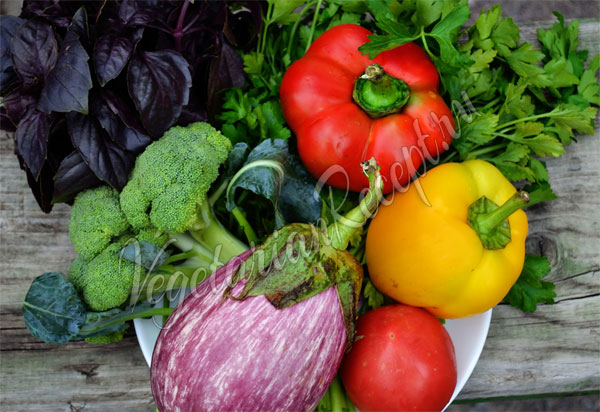 Какие овощи можно замораживать на зиму